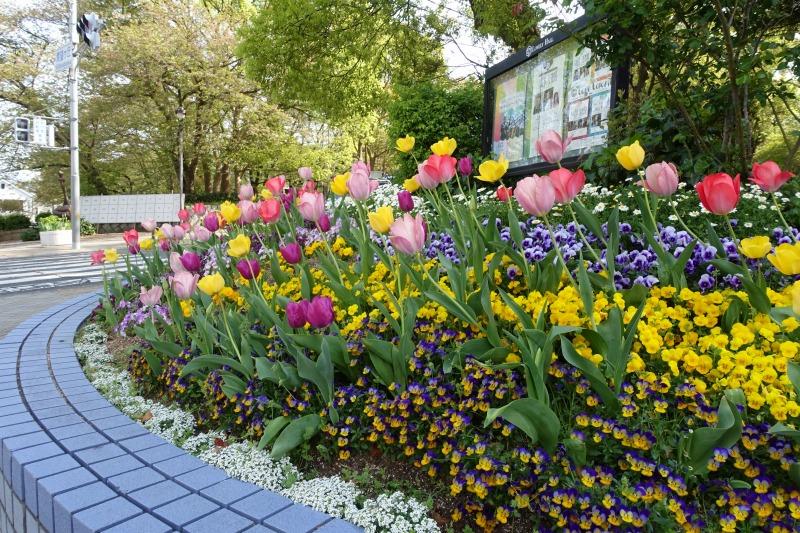 2018年4月10日の交差点花壇