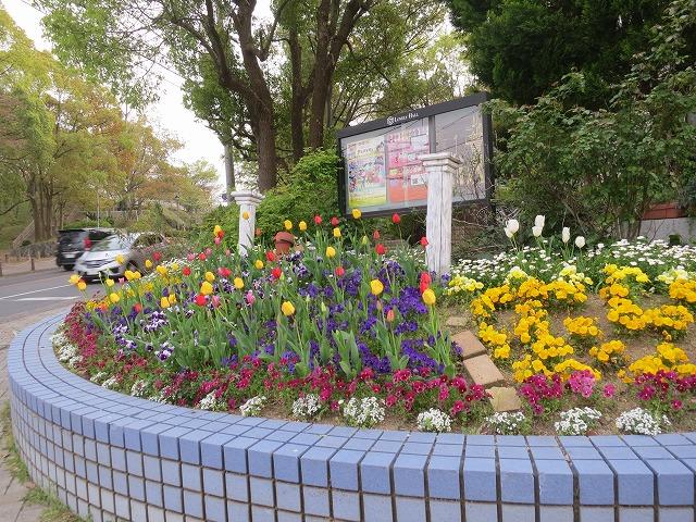 交差点花壇のチューリップ2014年