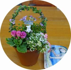 4月26日(第4日曜日)の講習は「母の日の寄せ植え」