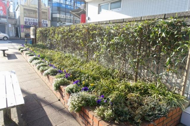 駅前ポケットパーク花壇の様子:2016年12月